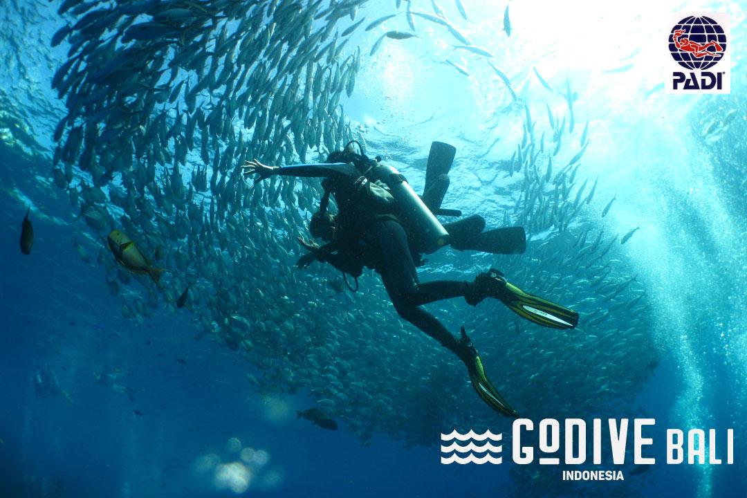 ダイビングや海のことブログ