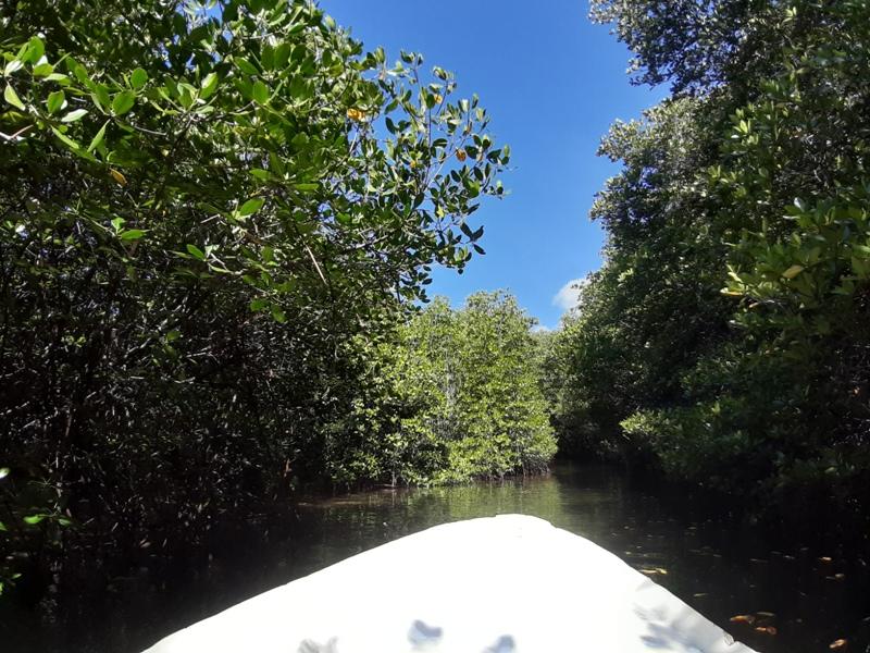 レンボンガン島マングローブ探検