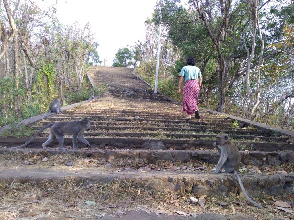 バリ島東部グマン寺院のおサルたち