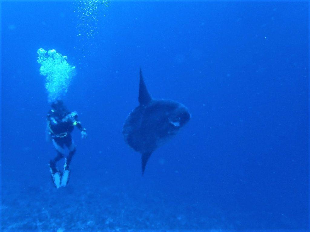 ヌサペニダ島 SDポイントでマンボウ降臨